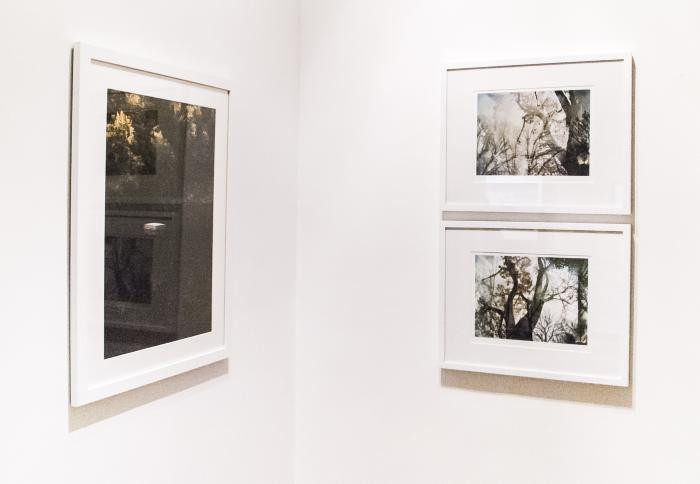 Installation View of CAUGHT ON FILM