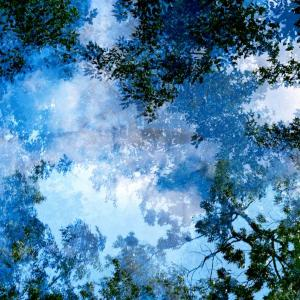 Transitory Space, Brooklyn, Prospect Park, Blue Tree Look Up #23 by Leah Oates