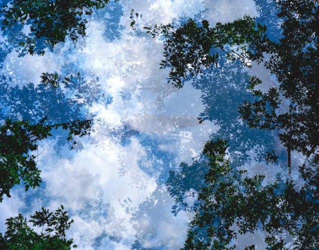 Transitory Space, Brooklyn, Prospect Park, Blue Tree Look Up #21 by Leah Oates