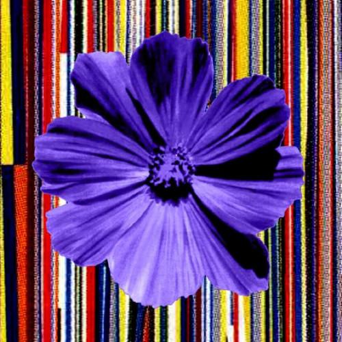 Petal Flower Blue #6 by Kim Luttrell