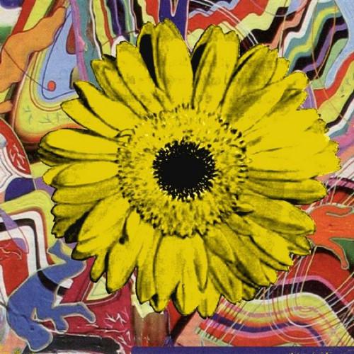 Sunflower Yellow #5 by Kim Luttrell