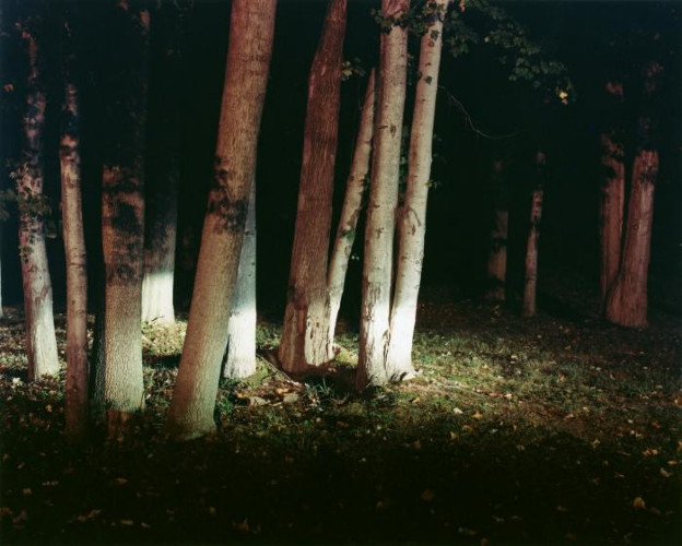 Woods by Maria Passarotti
