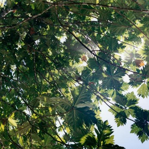 Canopy, Costa Rica 1 by Maria Passarotti