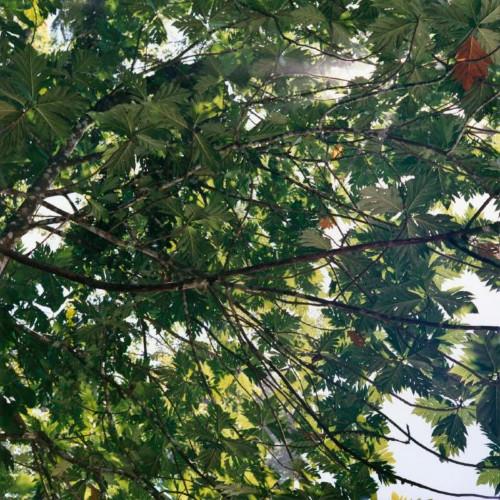 Canopy, Costa Rica 2 by Maria Passarotti