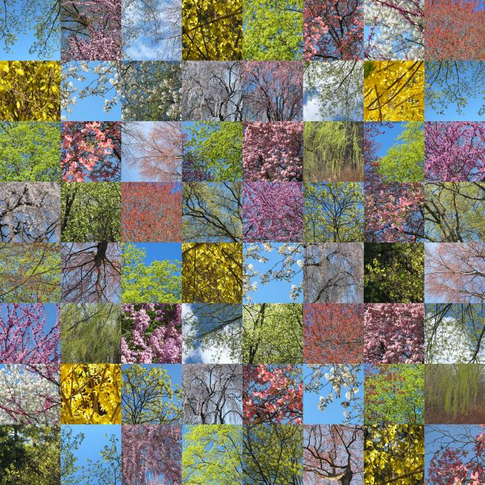 Spring Blooms by Maria Passarotti