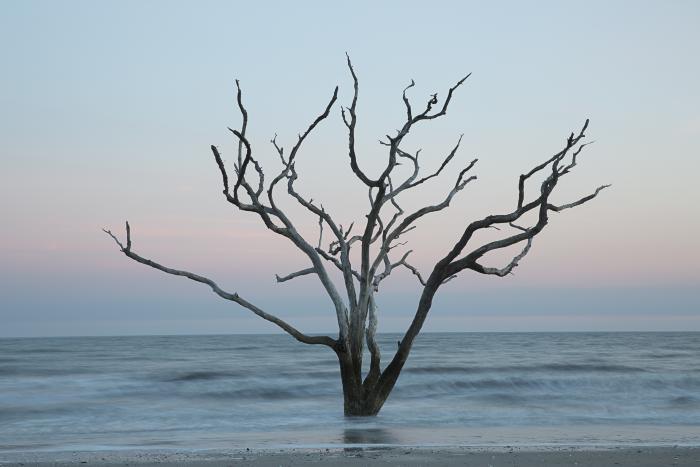 Tree in the sea #5, Botany Bay, Edisto, South Carolina by Carolyn Monastra