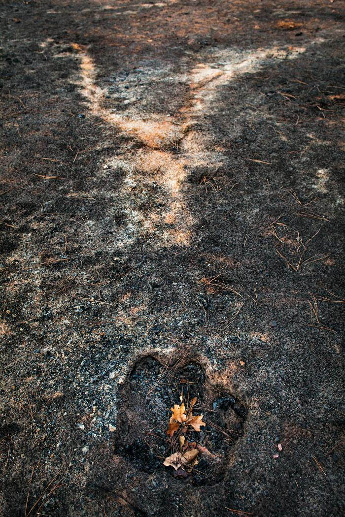 Stump hole and ash from a burned tree, East Bastrop, Texas by Carolyn Monastra