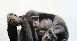 Colleen Moritz: Chimpanzee BONOBO Human Gorilla Orangutan