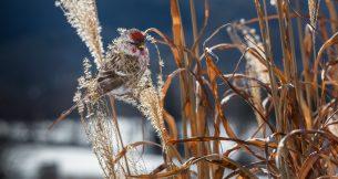 Carolyn Monastra Presents Climate Concerns for the Brooklyn Bird Club